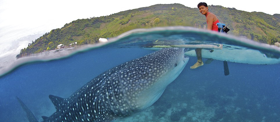 Whale Sharks Watching